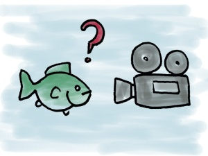 FishingVids